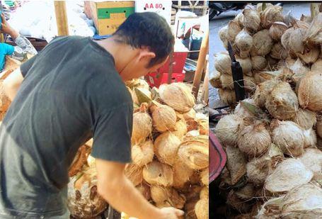 Bisnis Kelapa Yang Dapat Menghasilkan Jutaan Perhari di Tanjung Morawa